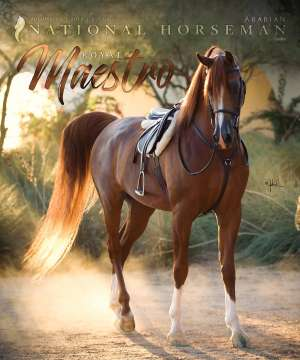 Cover of NHA v.1:6 2016 National Horseman Arabian Advertiser Gallery