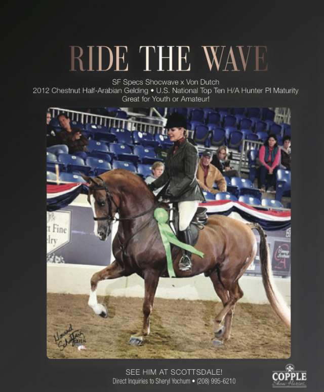 Ride The Wave Arabian Horse for Sale