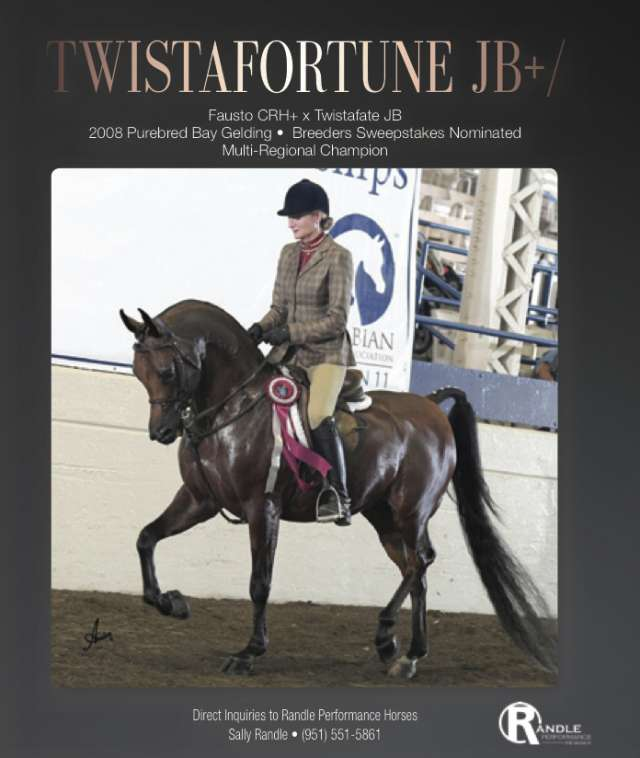 Twistafortune JB+/ Arabian Horse for Sale